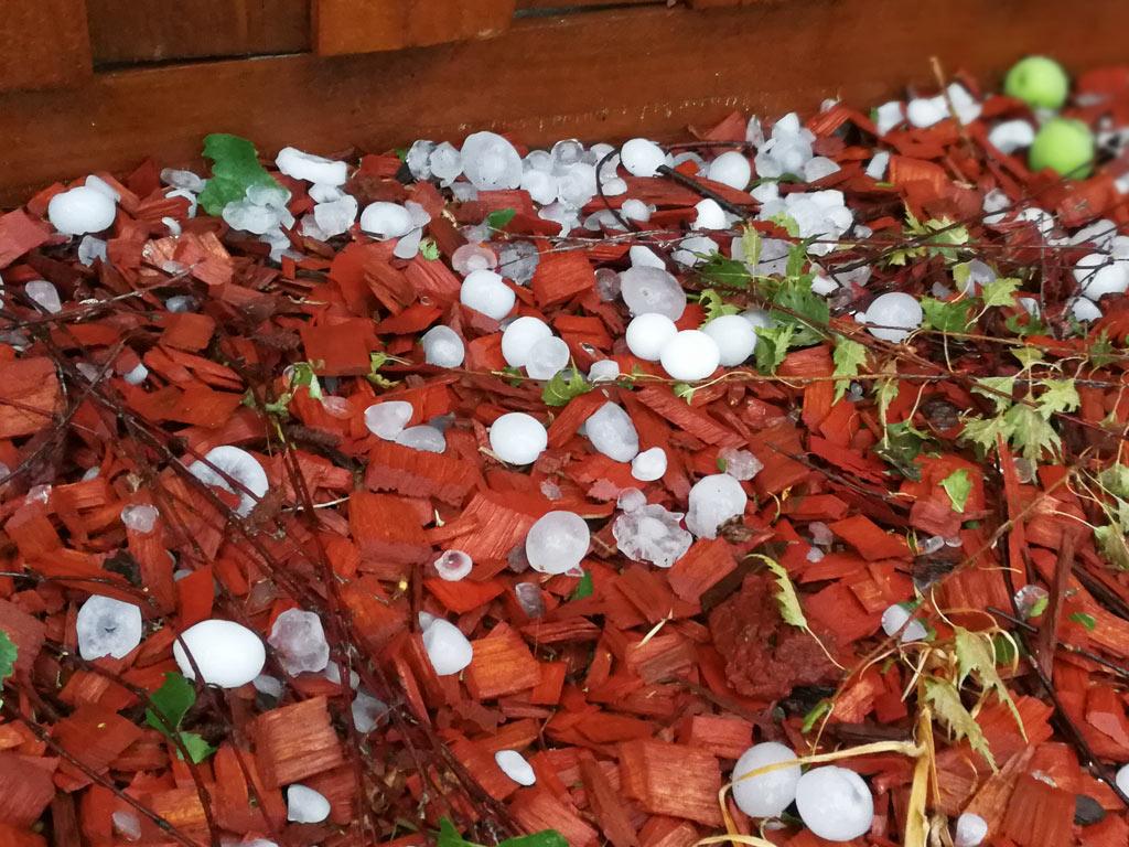 庭に落ちた雹